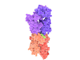 T-Zell-Rezeptor (violett) gebunden an einem Komplex zwischen einem Antigen (grün)  und einem MHCII -Molekül. (Isolierte Darstellung)