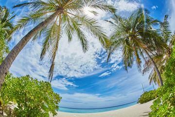 palms and mangrove trees on sand beach