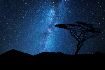 Tree silhouette under a sky full of stars