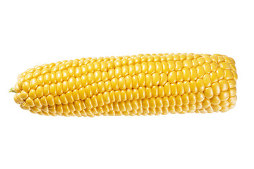 Wall Mural - Bright yellow ear of corn isolated on white background. Without a shadow.