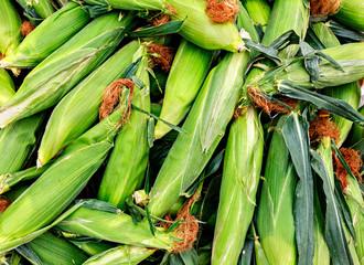 Fresh organic corn on the cob at a local farmers market