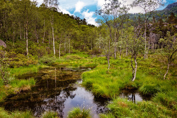 Norway landscape - Scene with swamp in forest.