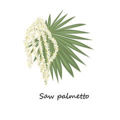 Saw palmetto flower.