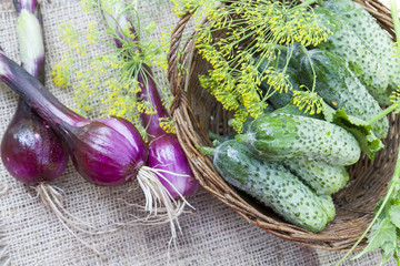 Fresh cucumbers in wicker basket with flowers dill and red onion on green summer background