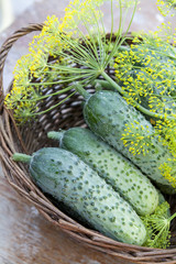 Fresh cucumbers in wicker basket with flowers dill