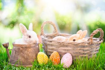 Osterhasen auf der Wiese mit Eiern