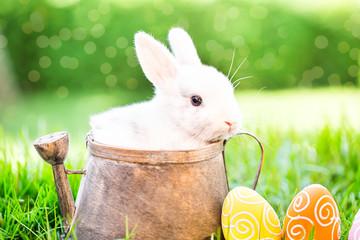 Oster Karte Flyer Kaninchen