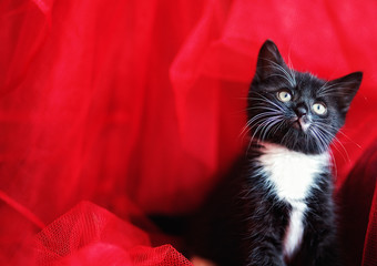 black kitten over a red background