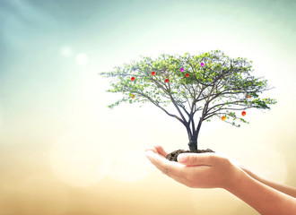 World environment day concept: Human hands holding fruitful tree over blurred green nature background