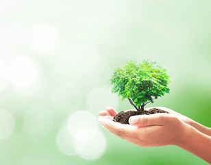 World environment day concept: Human hands holding hearth shape of tree over blurred nature background.