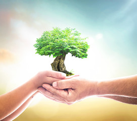 World environment day concept: Two human hands holding big tree over blurred green nature background.