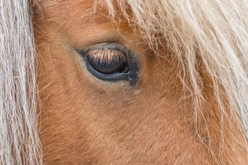 Closeup of a horse eye. Shallow depth of field.