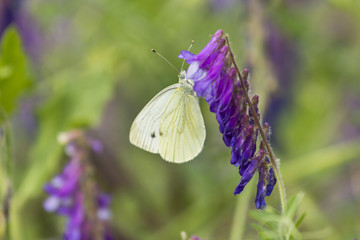 Butterfly on flower. Butterfly in nature. Yellow butterfly in flowers garden. Butterfly pollinating spring flowers