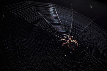 Big brown garden spider in center of his web with small insect prey at night