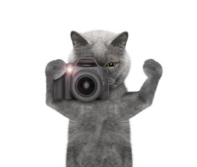 cat is going to take pictures of something