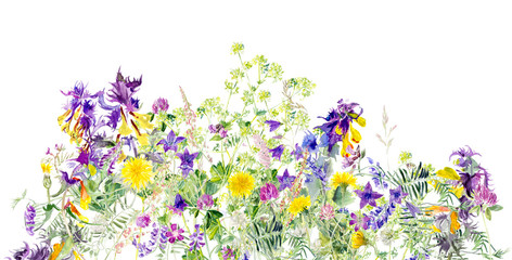 Pattern of meadow flowers. Decoration with blooming flowers. White background. Watercolor hand drawn illustration.