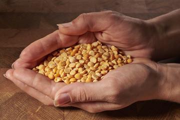 yellow peas in hands