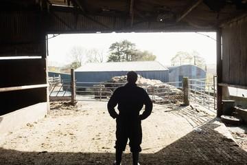 Farm worker standing in barn
