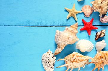 Sea shells on a wooden blue background.