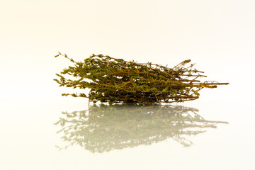Sprigs of dried thyme with reflection on white background
