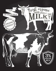 Cow blackboard vector