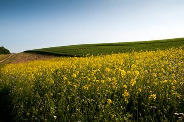 Beautiful fields of grain
