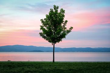 Lake Trasimeno (Umbria Italy)