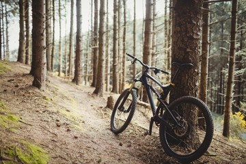 Mountain bike parked in forest