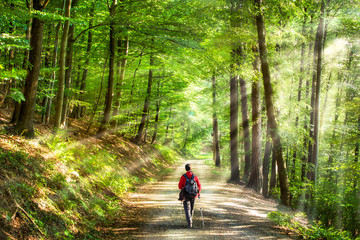 Wall Mural - Spaziergang im grünen Wald