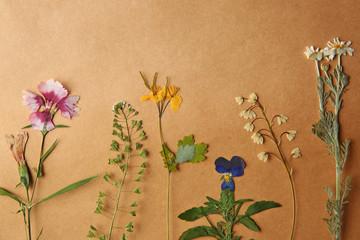 Beautiful dried flowers on beige paper