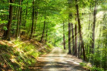Printed roller blinds Road in forest Grüner Wald im Sommer mit Sonnenstrahlen