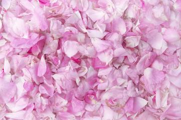 Petals of a pink roses texture.