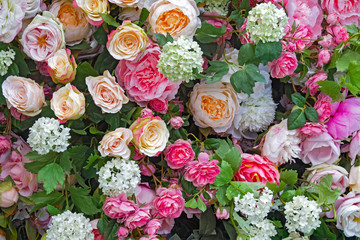 background of roses red, pink, white, green