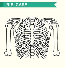Diagram showing rib case
