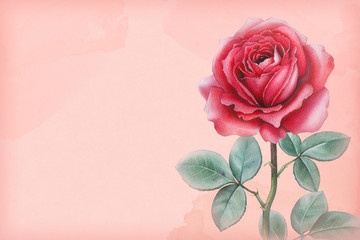 Watercolor illustration of a rose flower. Perfect for greeting
