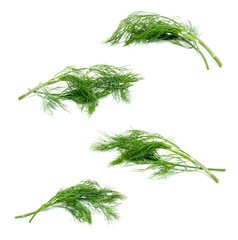 Collection of fresh green fennel isolated on a white