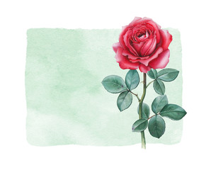 Watercolor illustration of a rose flower. Perfect for card