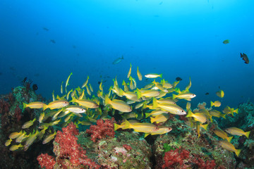 Underwater fish and coral reef
