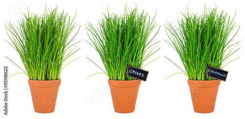 row of chives herbs in pot reihe schnittlauch kr uter. Black Bedroom Furniture Sets. Home Design Ideas