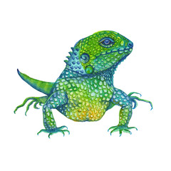 iguana lizard. isolated. watercolor illustration