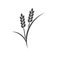 Wheat ears or rice icon