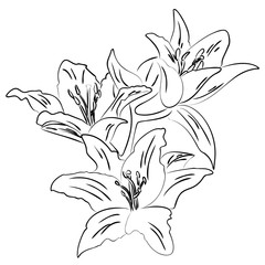 Lily with bud outline sketch vector