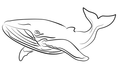 Vector hand drawn sketchy illustration whale