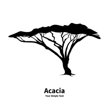 Vector illustration silhouette of an acacia