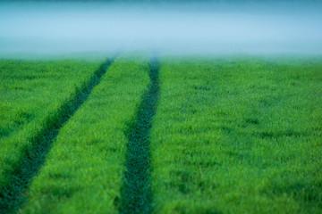 Tractor trail in misty field