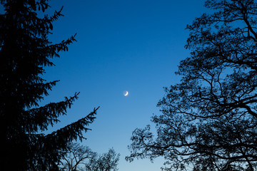 A moon at night between trees in the area around Bramki, a village in the administrative district of Gmina Błonie, within Warsaw West County, in east-central Poland