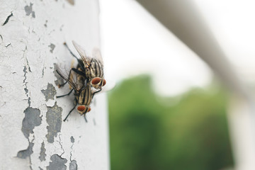 Couple flies mating