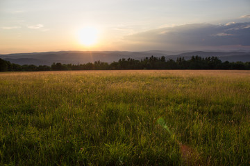Photo sur Toile Sauvage Sunset in Grassy Meadow