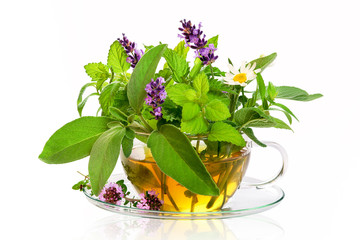 Frische Kräuter für Tee