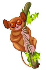 Cute loris on the green branch